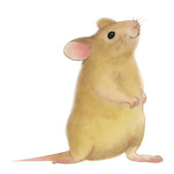 Mouse Real 03