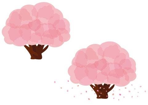 Sakura (Part 1: Lighter color)