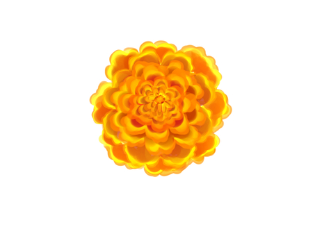 Watercolor style marigold