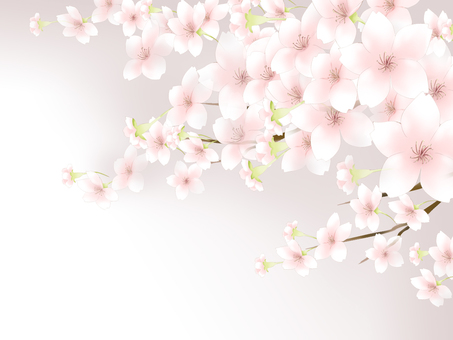 Cherry blossom background 1