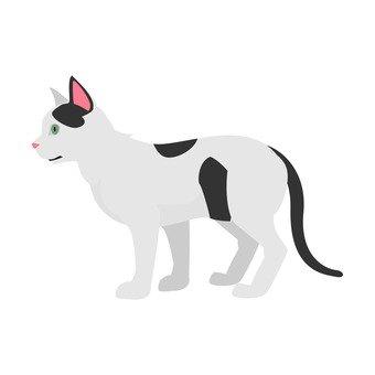 Cat - Butterie Cat