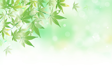 Maple _ green background