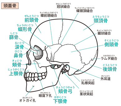 Skull (side)