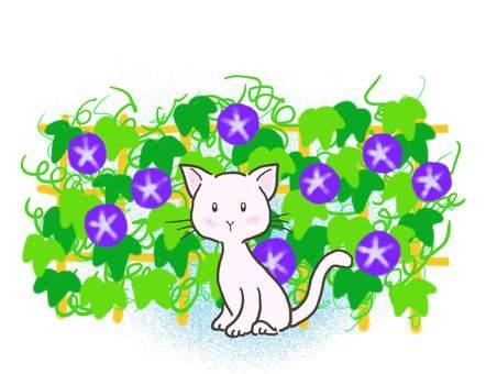 Morning Glory Cat 2