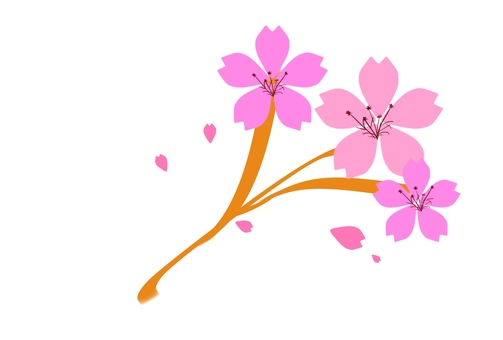 Cherry blossoms with branches