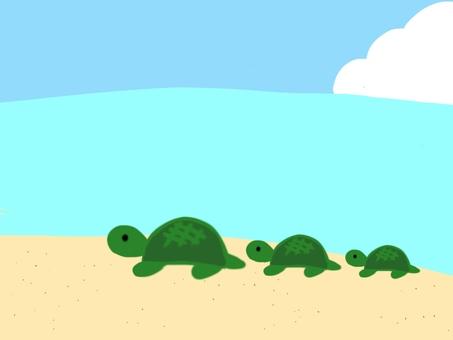 단짝 거북이
