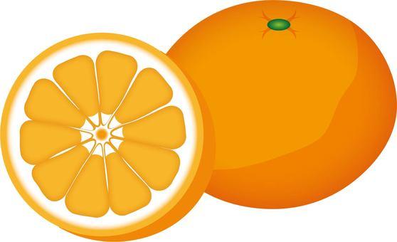橘子型F  -