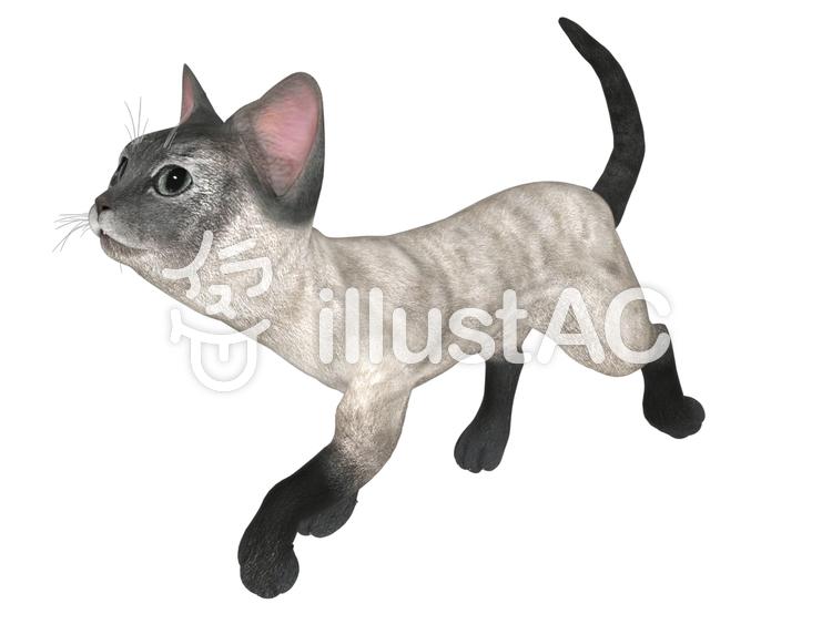 子猫(シャム)のイラスト
