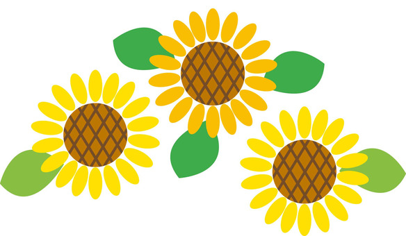Sunflowers - flowers