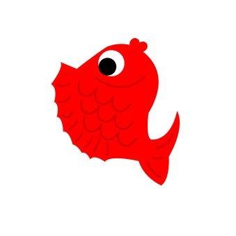 Sea bream (red)