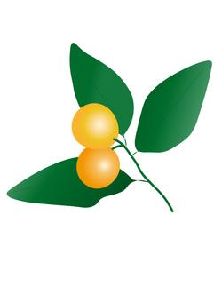 Kinkan orange