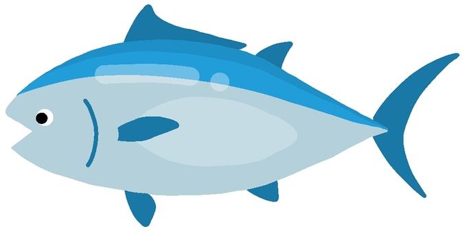 南部藍鰭金槍魚