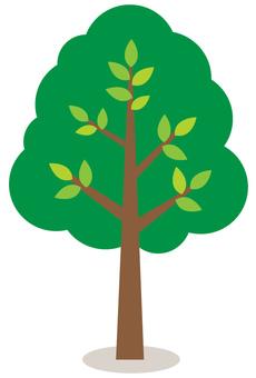 Illustration of tree 1