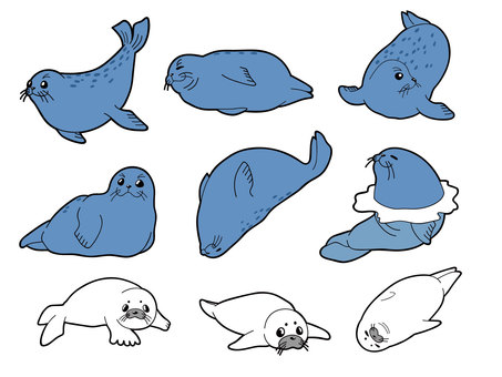 Seals Seven