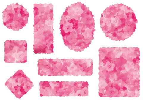 눈가 기자라베루 매화 (핑크)