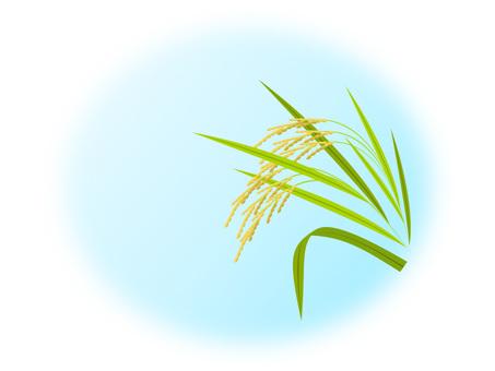 Rice -1