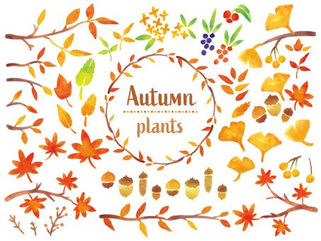 秋の植物セット