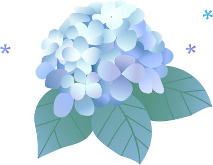 Hydrangea illustration