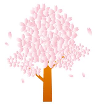 벚꽃 나무 01