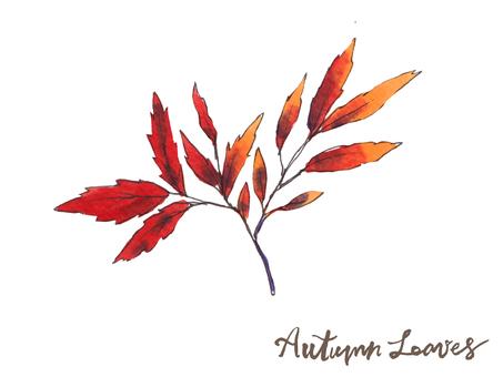 가을 나뭇잎 06