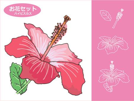 お花の素材 ハイビスカス