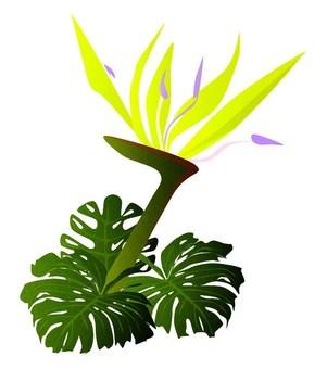 Flower (Monstera)