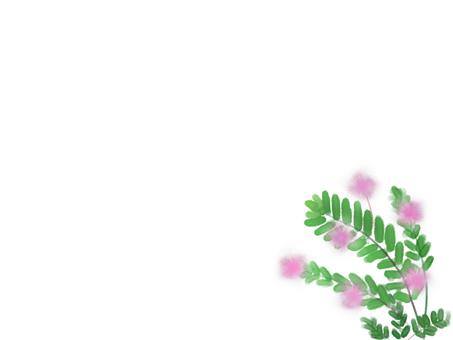미모사 (오지 기소 우)