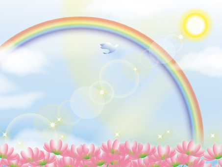Flower field and rainbow