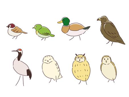 8 types of birds