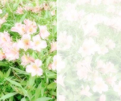Flower message card 1 - C