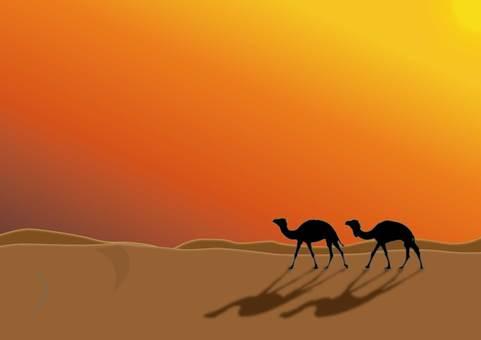 沙漠和駱駝