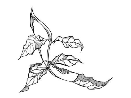 Plant 001 (Kiha)