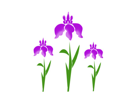 Iris ver03