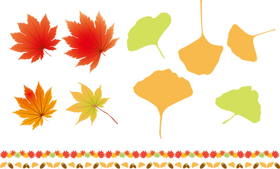 Autumn leaves, ginkgo and acorn