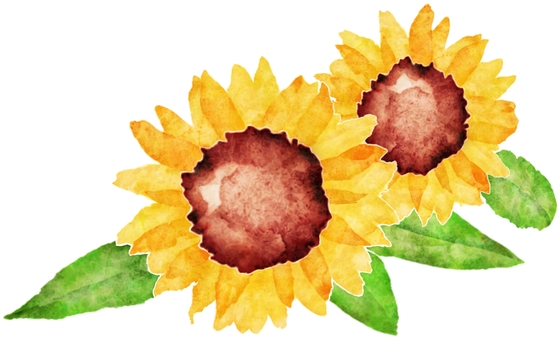 Sunflower watercolor painting - two flowers