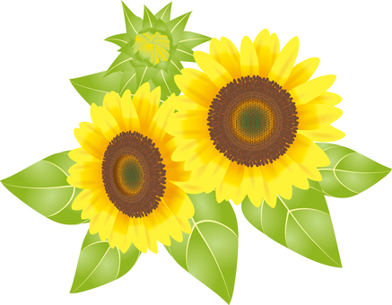 Cut _ Sunflower