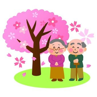 An elder celebrating a cherry-blossom viewing