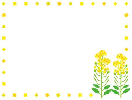 Canola blossom