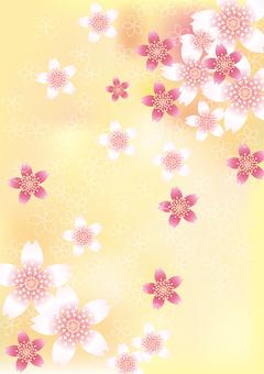 벚꽃의 꽃 75