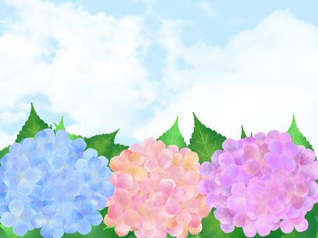 繡球花和天空