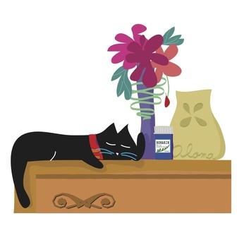 Good night, black cat.