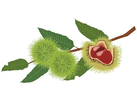 Chestnut branch _ 1