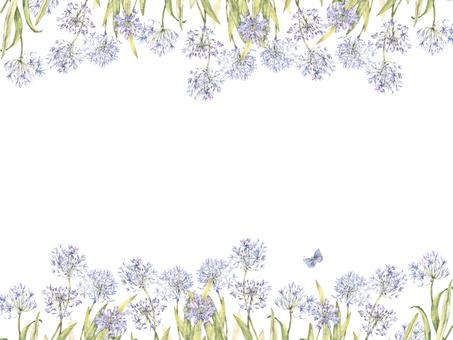 Flower frame 366 - A cool flower frame of Agapanthus