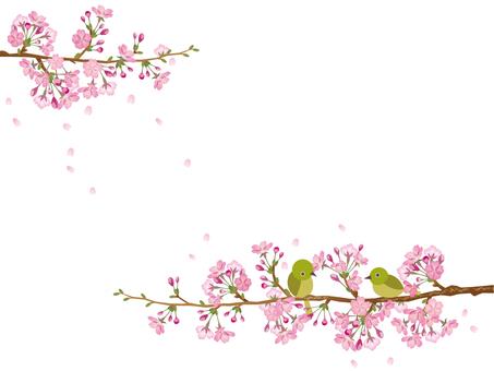 Cherry tree and mezzo _ 3