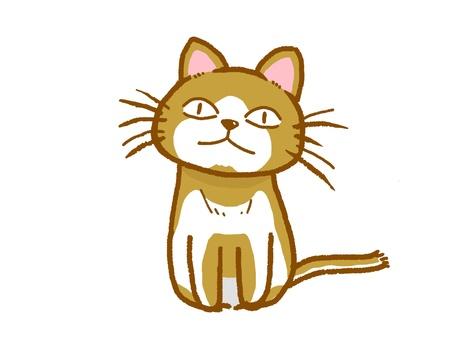 고양이 정면.