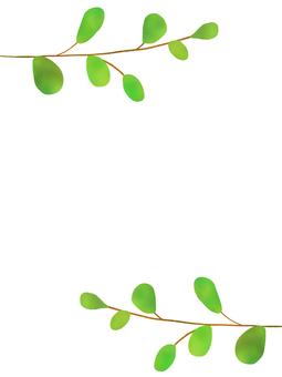 Eucalyptus plant frame