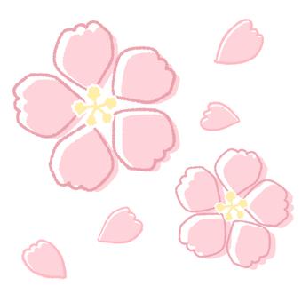 간단한 필기 風桜
