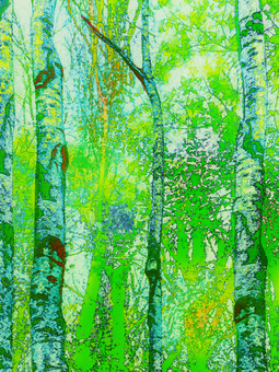 White birch forest in early summer