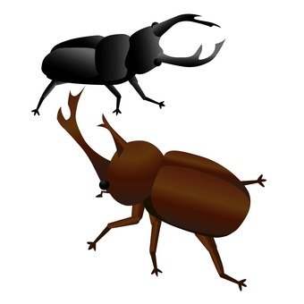 Stag beetle and beetle