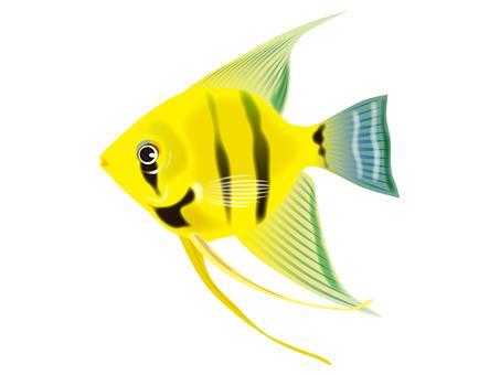 熱帶魚12